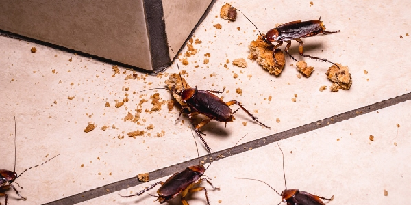 Food Crumbsthat attracts cockroaches