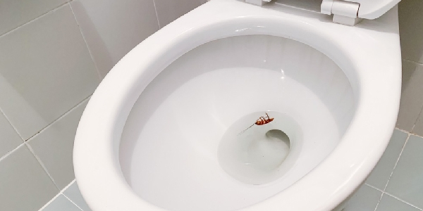 Toilet that attracts cockroaches