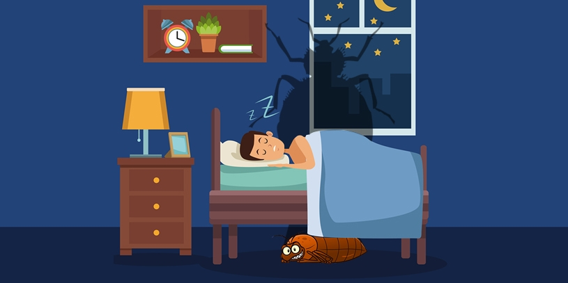 5 Early Signs of Bed Bugs Infestation