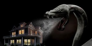 Top 5 Ways to keep snakes away from your home