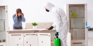3 Things to do before Pest control services